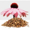 Echinacea - Solhatt Rot HiltonHerbs