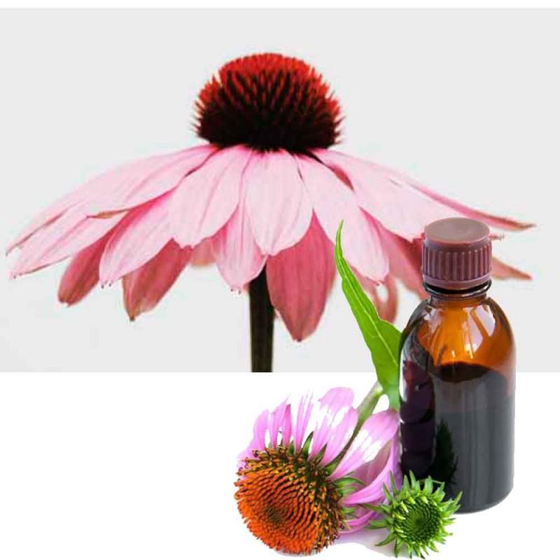 Echinacea - Solhatt tinktur Hilton Herbs