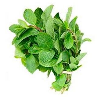 Mint Hilton herbs